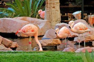 Flamingo-Las Vegas-Property-Amenities-1