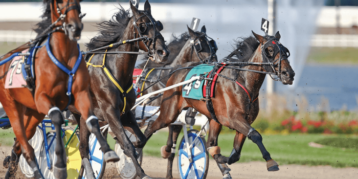 Horses harness racing